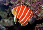 Bán con cá gần chục tỷ đồng, mua được 3 căn chung cư cao cấp