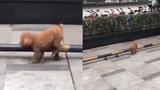 """Phong cách tập thể dục """"nhàn nhã"""" của chú chó đáng yêu"""