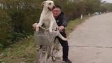 """Chú chó may mắn được cưng chiều nhất """"Vịnh Bắc Bộ"""""""