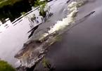 Cá sấu 'khủng' lao như tên bắn, giật cá của ngư dân