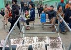 Dân đưa ruồi đến bao vây nhà máy rác ở Hà Tĩnh