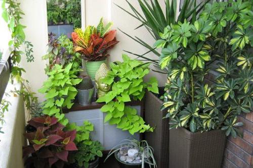 Những điều cần biết khi trồng cây ban công để đẹp và hút tài lộc
