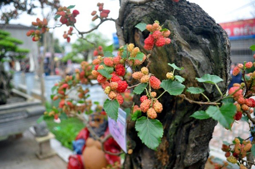 Kiêng trồng những loại cây này trước cửa nhà để gia đình tránh gặp xui xẻo