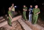 Bắt cả đoàn công nông chở gỗ lậu giữa khuya