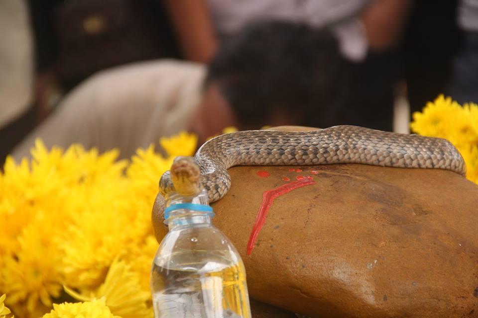 rắn thần,mộ vô chủ,quảng bình