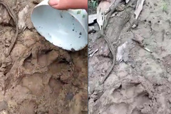 Hàng loạt con dê mất tích bí ẩn cùng dấu chân lạ