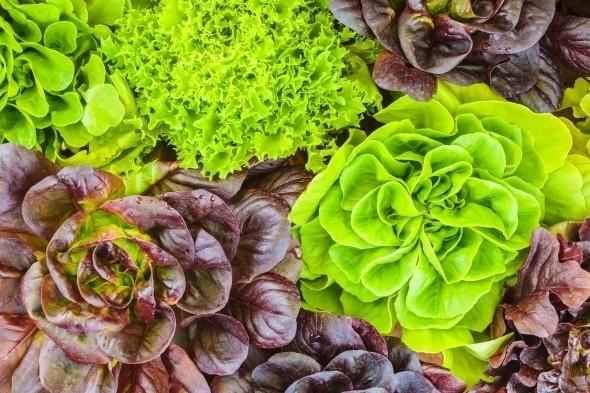 Xuân sang, trồng những loại rau này thì quanh năm hái mỏi tay không hết
