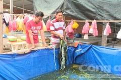 Chê chức giám đốc nước ngoài, bỏ về quê nuôi lươn