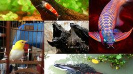 Thú chơi ngông của đại gia Việt: Săn 'quái vật' làm thú cưng