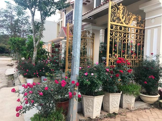 biệt phủ,biệt phủ hoa hồng,vườn hồng đẹp,hoa hồng