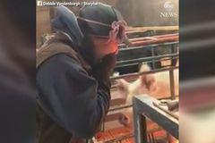 Cô gái bất ngờ vì được cầu hôn trong chuồng lợn