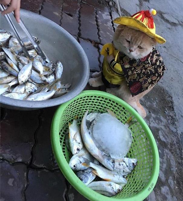 Chú mèo bán cá, thịt gây sốt ở chợ Hải Phòng