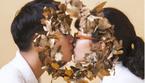 Bén duyên tại 'Đường lên đỉnh Olympia', cặp đôi quyết cầu hôn bằng… vòng nguyệt quế