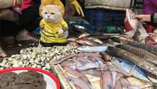 Dân mạng nước ngoài thích thú với chú mèo bán cá ở Việt Nam