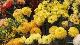 Hoa khổng lồ giá 1 triệu đồng/cành ở TP.HCM