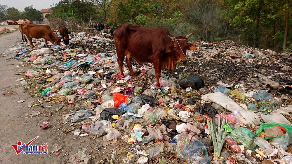 ô nhiễm,ô nhiễm môi trường,Vĩnh Phúc
