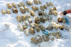 Nga tìm thấy hàng chục bàn tay người gần biên giới Trung Quốc
