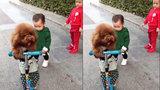Em bé tức phát khóc vì bị cún cưng cướp mất xe scooter
