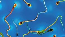 Những chức năng bất ngờ của tinh trùng