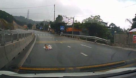 Bé bò lổm ngổm trên đường cao tốc Quảng Ninh