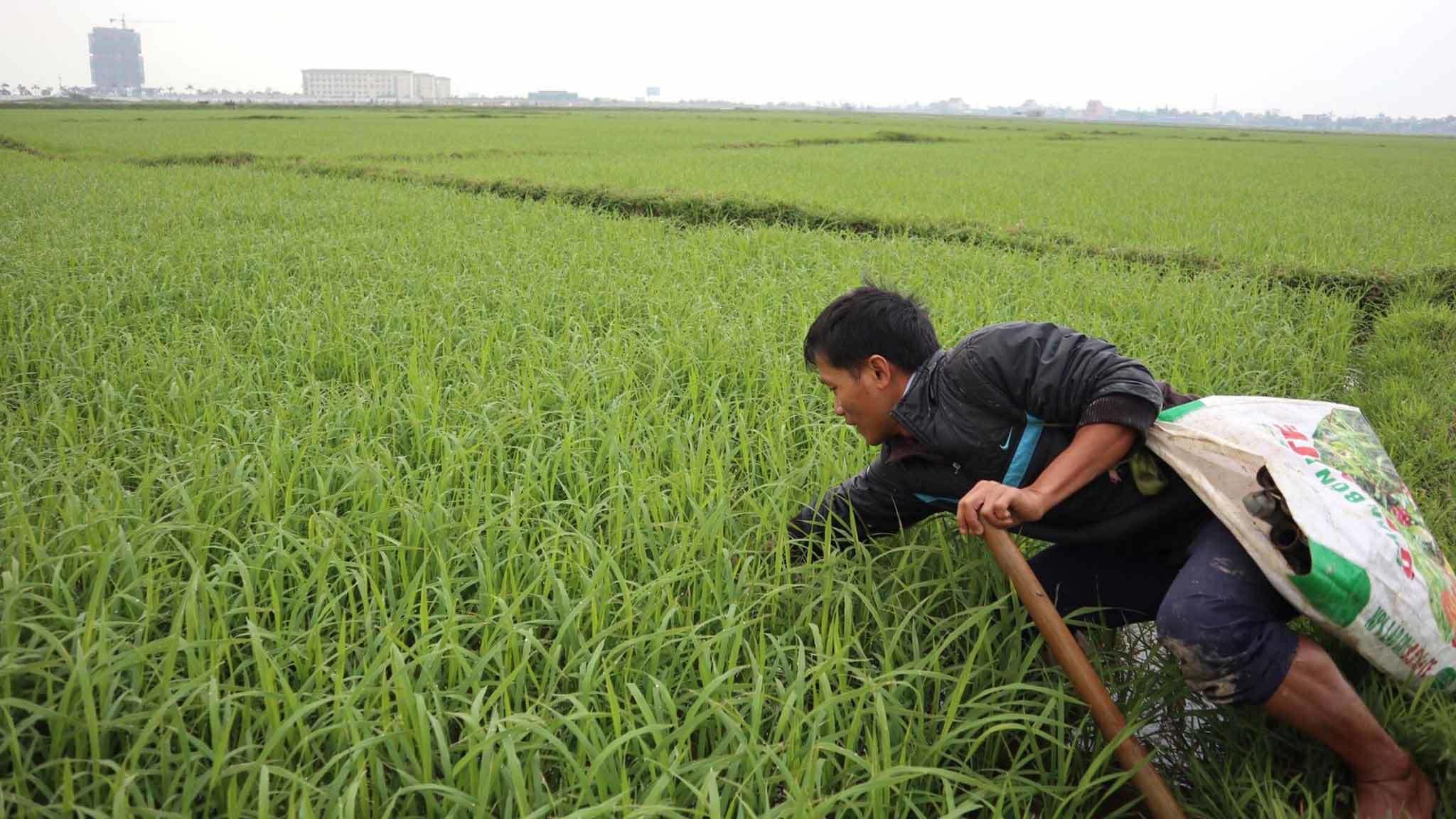 Tuyệt chiêu bắt lươn đồng của thầy giáo cấp 3 ở Hà Tĩnh