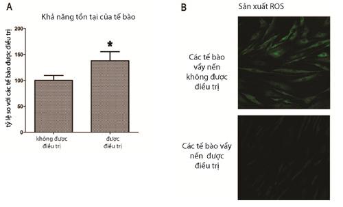 Tinh dầu thực vật giúp phục hồi tế bào bệnh vẩy nến - ảnh 2