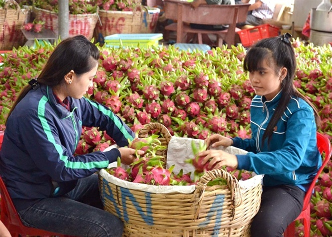 thương lái trung quốc,nông sản việt,xuất khẩu nông sản