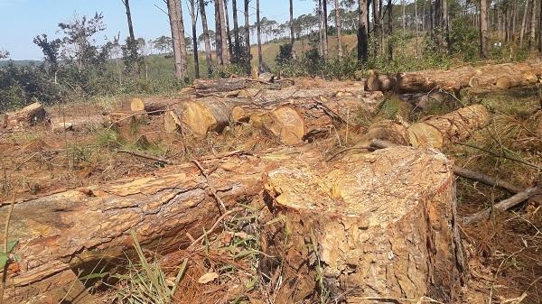 Bắt chủ tịch xã nhận hối lộ cho phá rừng ở Đắk Nông