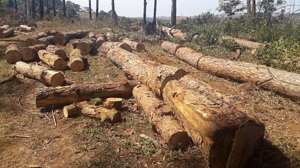 Bắt thêm 1 đối tượng vụ chủ tịch xã nhận tiền 'bảo kê' phá rừng