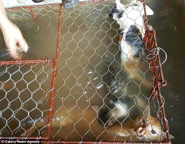 thịt mèo,Việt Nam,báo Anh