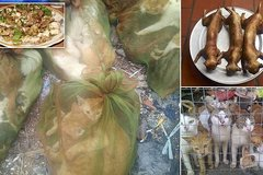 Chợ thịt mèo Việt Nam lên báo Anh