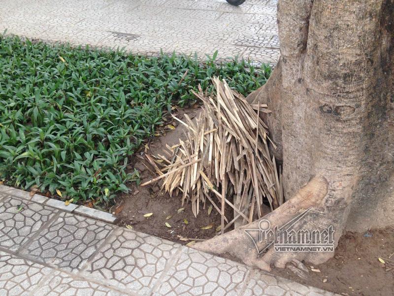 Hà Nội,chông tre,vườn hoa