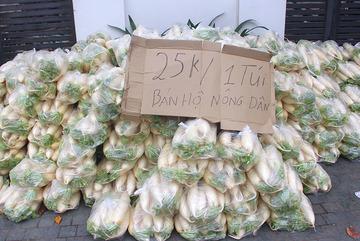 Giải cứu hàng tấn củ cải đổ đống cho nông dân Hà Nội
