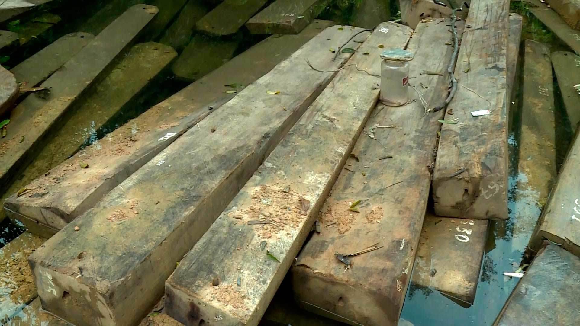Huyện chi nửa tỉ chuyển gần 100m3 gỗ lậu ra khỏi rừng