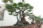 Chiêm ngưỡng vườn cảnh triệu đô của đại gia Phú Thọ