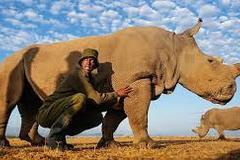 Con Tê giác trắng đực cuối cùng trên trái đất đã chết