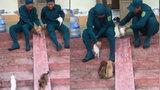 Hai thanh niên thích thú cho chó chơi cầu trượt