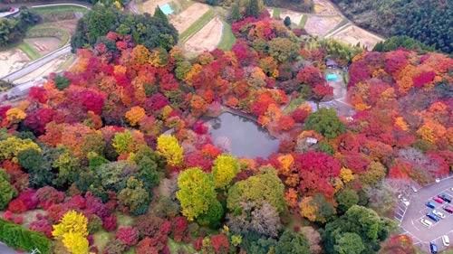 Bức tranh thiên nhiên bốn mùa tươi đẹp ở Oita