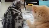 """Câu chuyện ngắn """"đẫm nước mắt"""" giữa chó và mèo"""