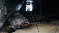 Lạnh lẽo rợn người bên trong chung cư cháy 13 người chết