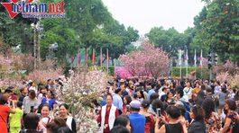 Ngàn người chen nhau thưởng hoa anh đào bên hồ Gươm