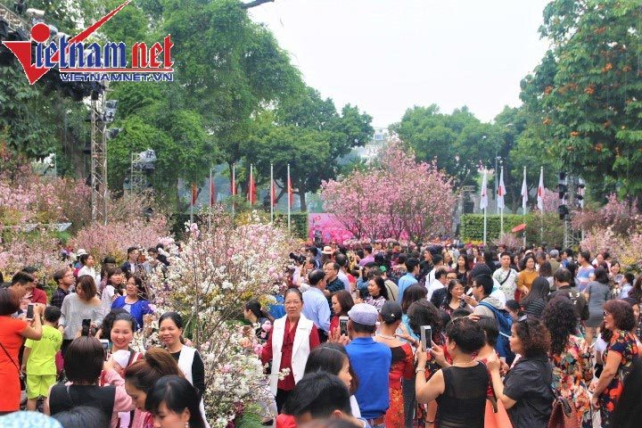 hoa anh đào,lễ hội hoa anh đào,hồ Gươm,bờ hồ