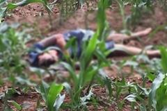 Nam thanh niên chết ở ruộng ngô: 1 nghi phạm đầu thú