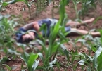 Hà Nội: Phát hiện thi thể chết bất thường giữa cánh đồng