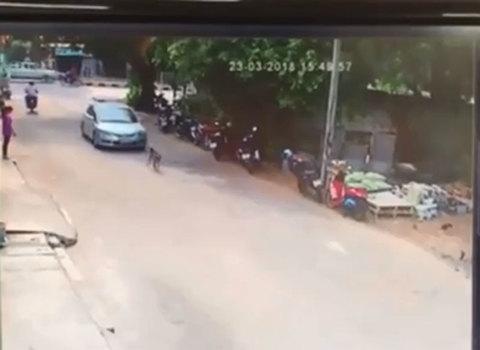 Clip tài xế ô tô cố tình cán chết chó thả rông khiến dân mạng tranh cãi
