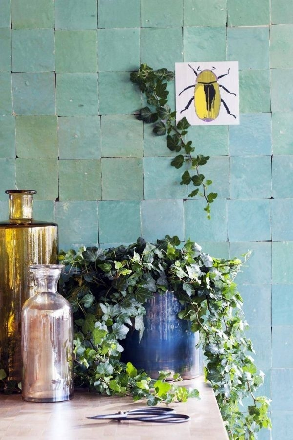 Nhà nhỏ tốt nhất nên trồng những loại cây leo vừa xanh mát lại đẹp mộng mơ này!