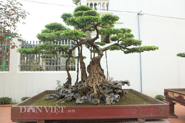 Sanh cổ Nỏ thần qua tay vua Bảo Đại về nhà đại gia Phú Thọ