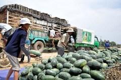 Quảng Tây - Trung Quốc: 'Cấm cửa' hoa quả Việt không rõ nguồn gốc