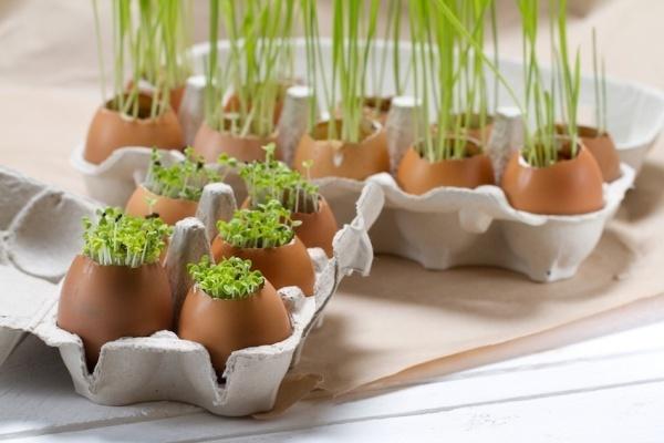 Trồng cây trong vỏ trứng, ý tưởng độc đáo phủ xanh nhà chật hẹp
