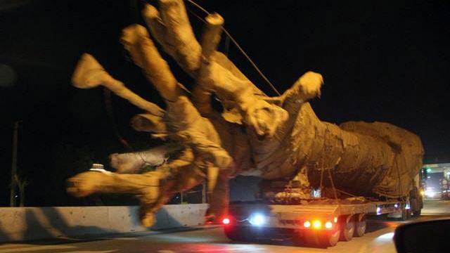 Quảng Bình sẽ phạt nguội xe chở cây như 'quái thú' trên QL1A